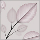 Natural Leaves 05